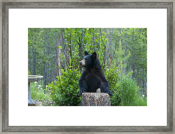 The Cub That Came For Lunch 3 Framed Print
