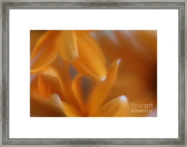 The Dance Of The Petals Framed Print