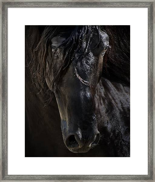The Dark Horse Framed Print