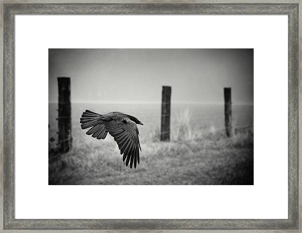 The Day Of The Raven Framed Print