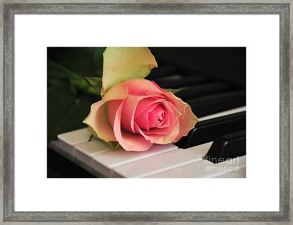 The Delicate Rose Framed Print