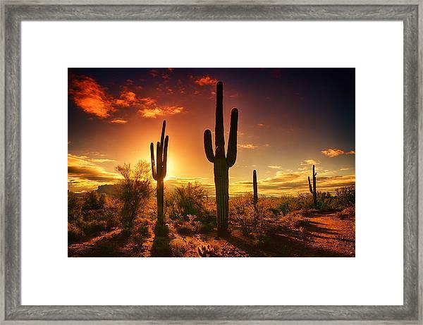 The Desert Awakens  Framed Print