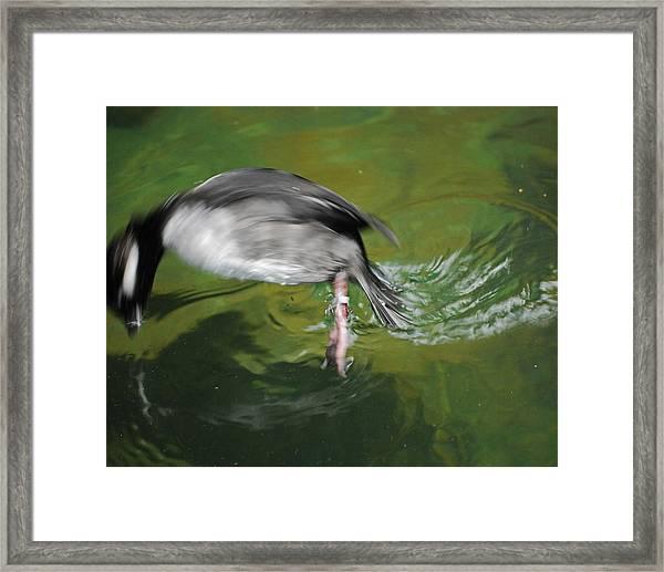 The Dive Framed Print