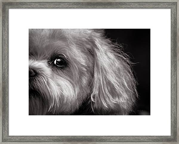 The Dog Next Door Framed Print