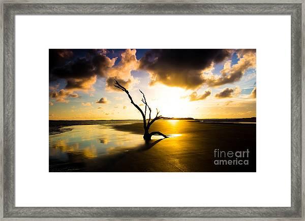 The Driftwood Tree Folly Beach Framed Print