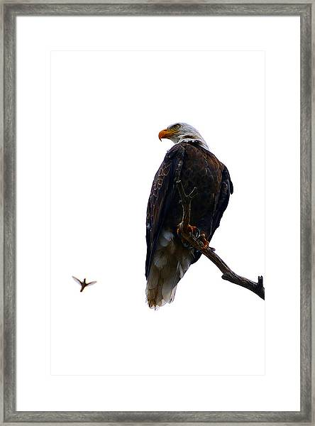 The Eagle And The Hummingbird Framed Print
