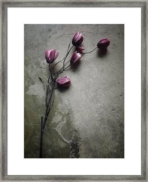 The Elegant Tulip Framed Print