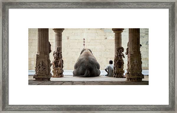 The Elephant & Its Mahot Framed Print