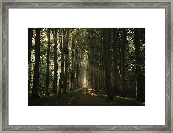 The Essential Framed Print
