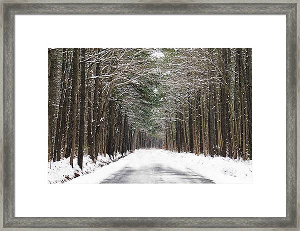 The Evergreen Way Framed Print