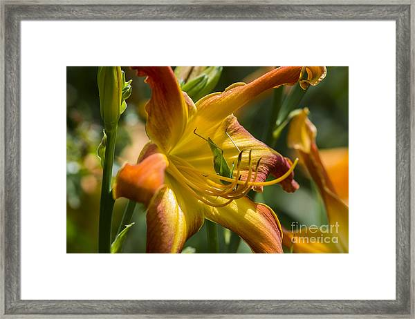 The Eye Of A Cricket... Framed Print