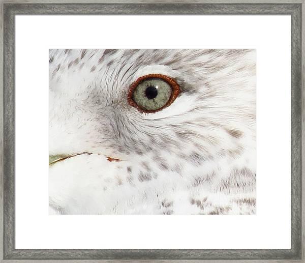 The Eye Of The Gull Framed Print