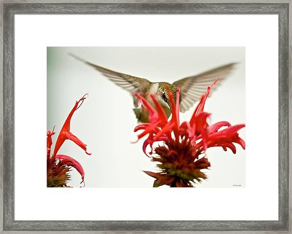 The Eye Of The Hummingbird Framed Print