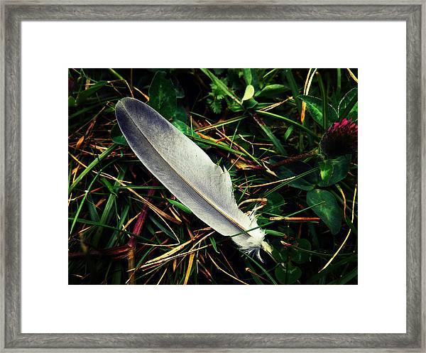 The Fallen Feather Framed Print
