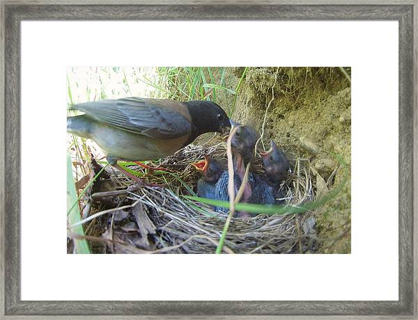 The Feed Framed Print by Rylee Stearnes