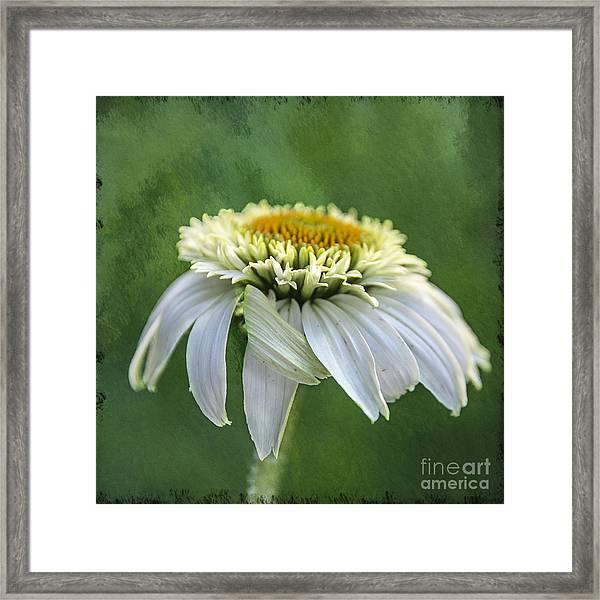 The First Coneflower Framed Print
