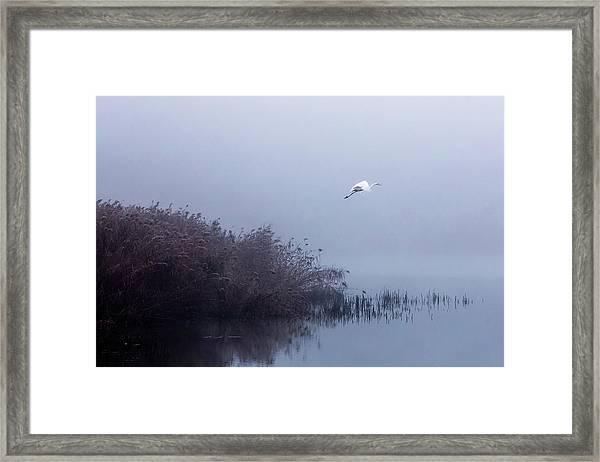 The Flight Of The Egret Framed Print