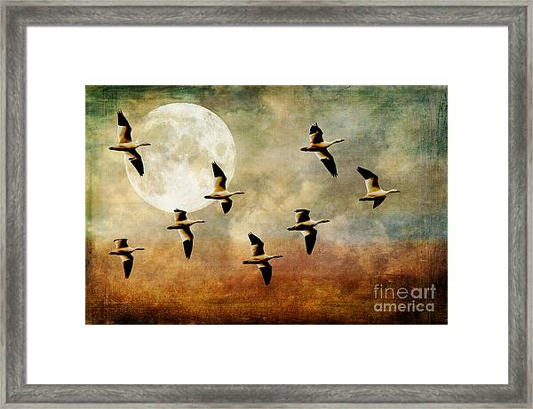Framed Print featuring the photograph The Flight Of The Snow Geese by Lois Bryan
