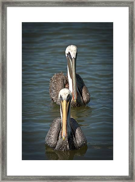 The Flotilla  Framed Print