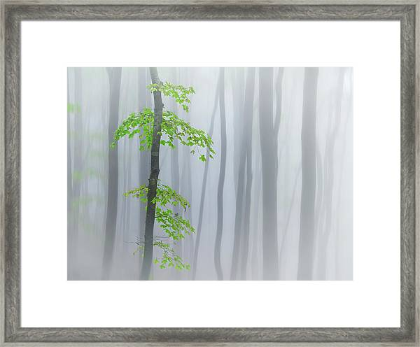 The Fog And Leaves Framed Print