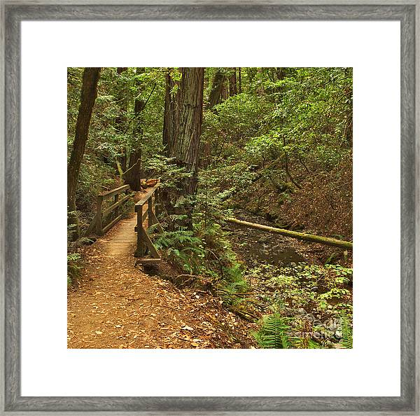 The Forest Goes On Framed Print