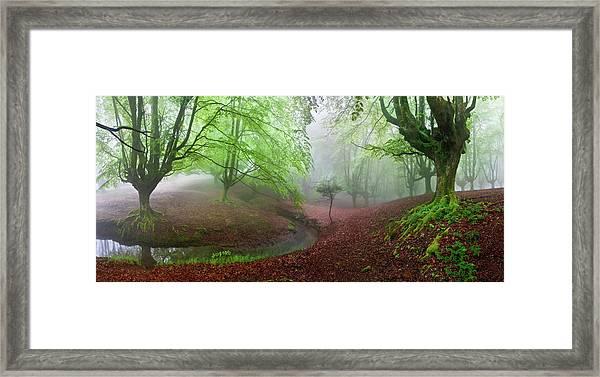 The Forest Maravillador IIi Framed Print