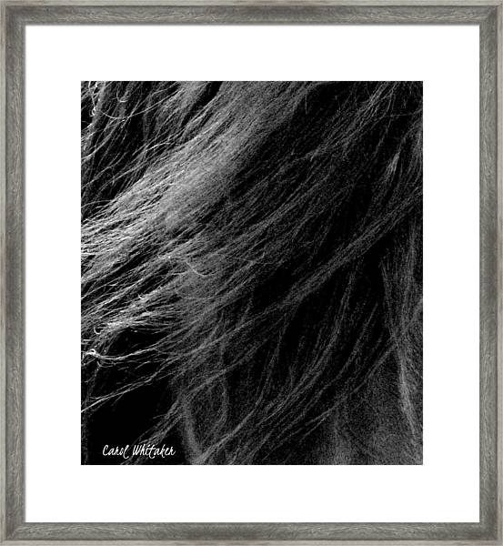 The Friesian Spirit Framed Print