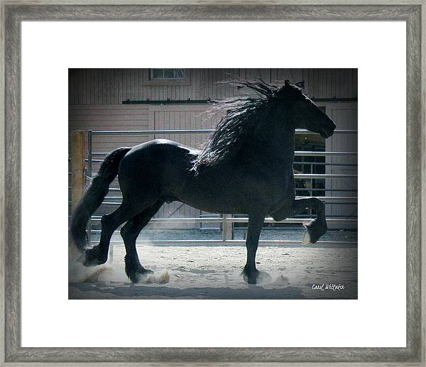 The Friesian Trot Framed Print