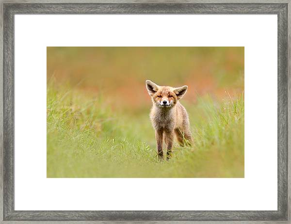 The Funny Fox Kit Framed Print