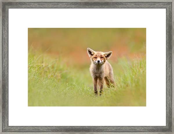 The Funny Fox Kit Framed Print