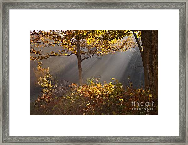 The Garden Of Eden Framed Print