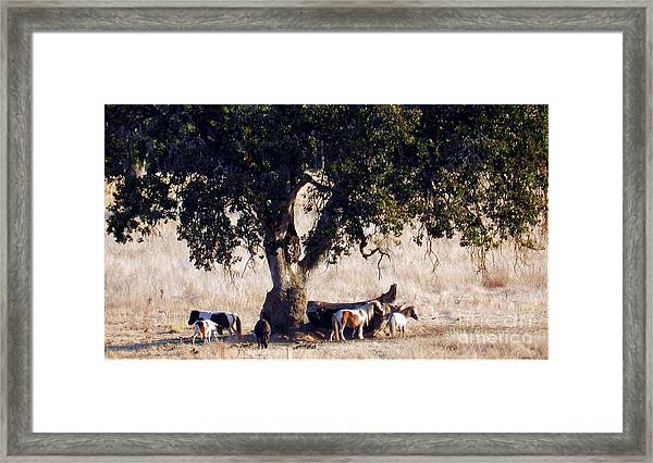 The Gathering Tree Framed Print