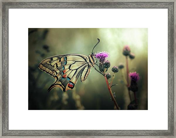The Gift Of Existence Framed Print