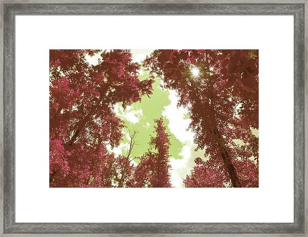 The Glimpse Sublime Framed Print