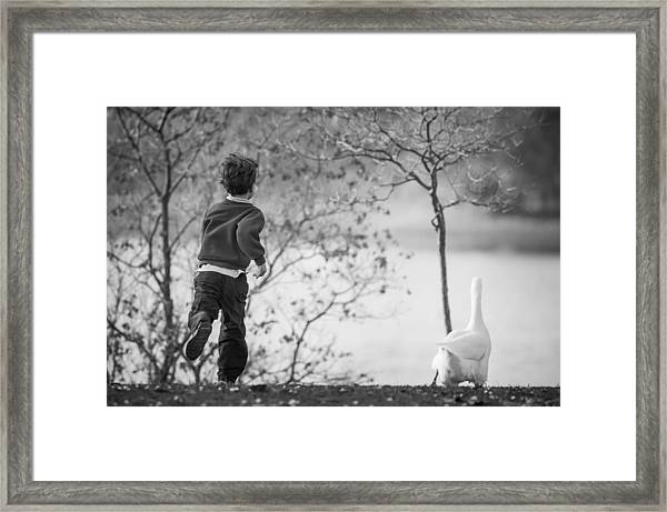 Framed Print featuring the photograph The Goose Chase by Priya Ghose