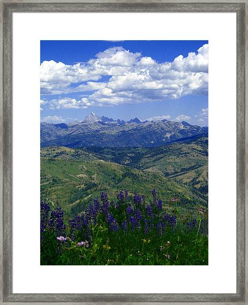 The Grand And Lupines Framed Print