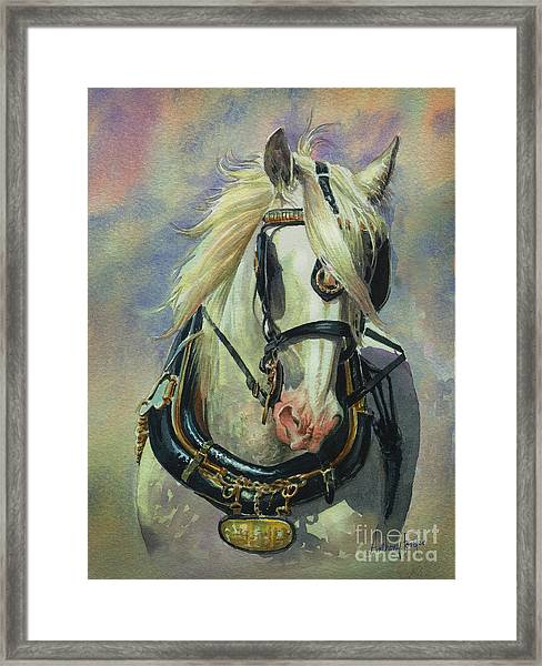 The Gray Shire Horse Framed Print