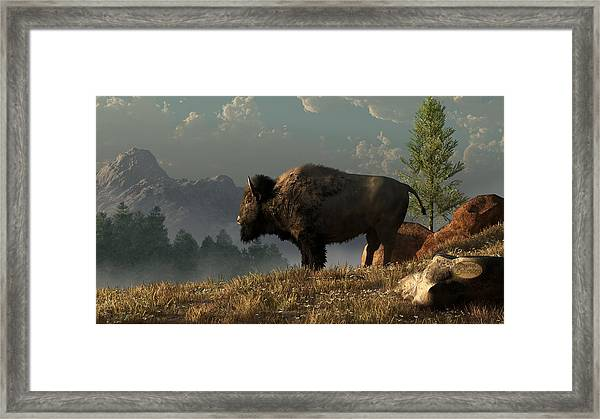 The Great American Bison Framed Print
