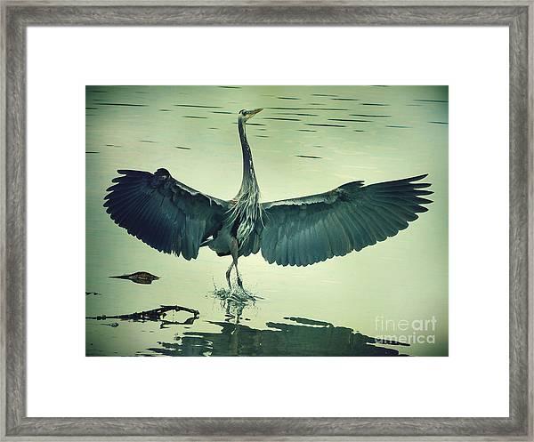 The Great Blue Heron Landing Framed Print