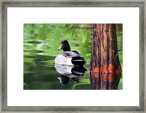 The Green Mirror Framed Print