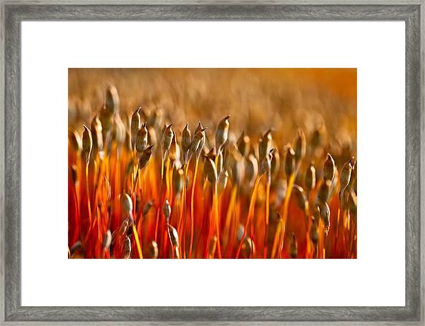 The Haircap Moss Framed Print