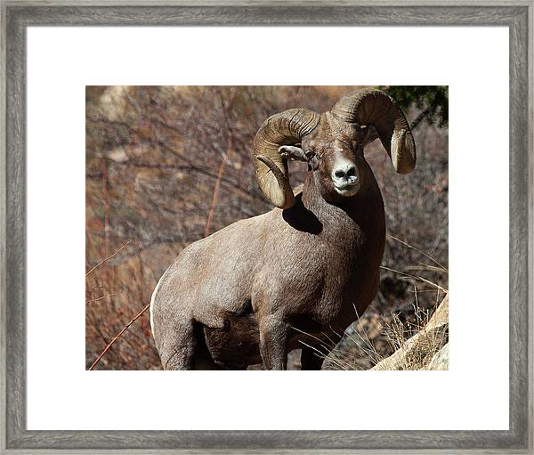 The High And Mighty Framed Print