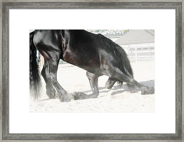 The Horse's Respect Framed Print