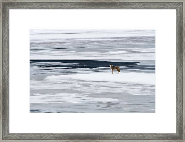 The Howl Of The Coyote Framed Print