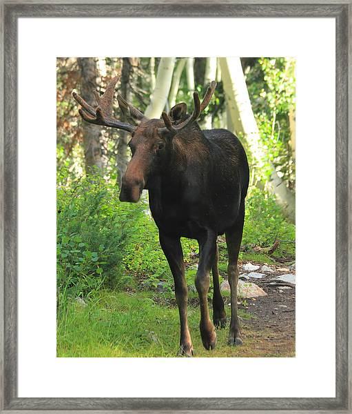 The Keeper Of The Trail Framed Print by Gene Praag