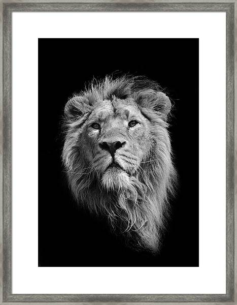 The King Asiatic Lion Framed Print