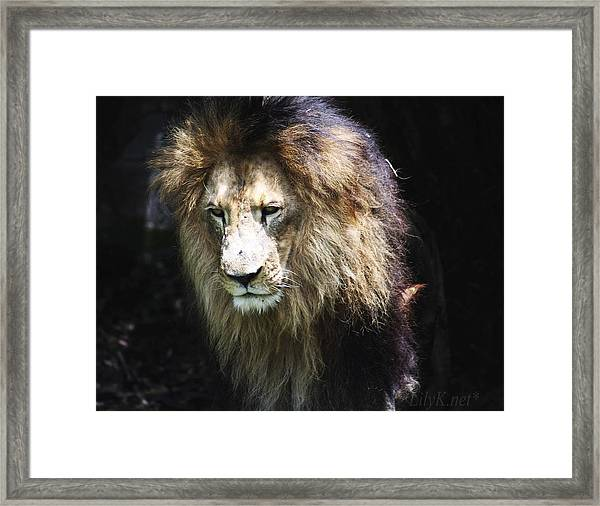The King In The Shadows Framed Print