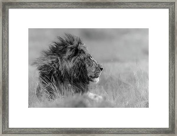 The King Is Alone Framed Print
