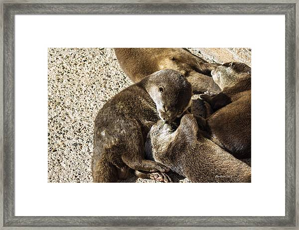 The Kiss Framed Print by Dick Botkin