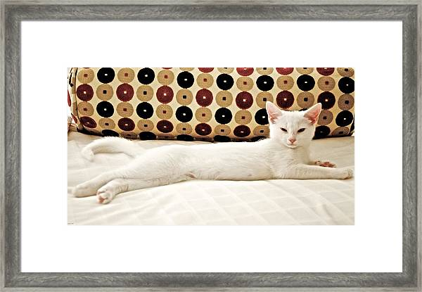 The Lap Of Luxury Framed Print